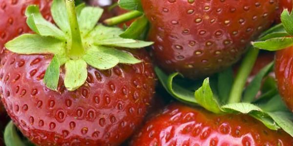 Pós colheita de morango em Nova Friburgo